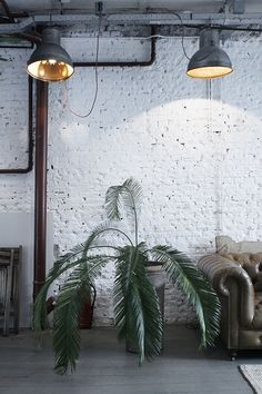Urban jungle, green plant, industrial, raw, concrete , brick wall >> http://blog.bodieandfou.com/
