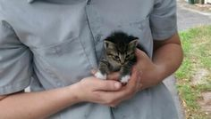 Tiny Stray Kitten Walks Up to Man, Asking to Be Adopted - Love Meow