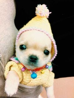 Cute little puppy in a winter costume.... click on picture to see more