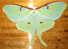 DIY butterfly costume wings tutorial. Luna moth!