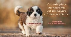 La vie n'est pas un mystere elle est simplement plus raffiné que nous... St Bernard Dogs, Saints, Animals, Life, Love Life, Being Happy, Animales, Animaux, Animal