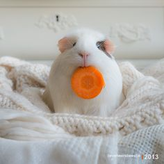 Carrot is mine, thankyouverymuch.