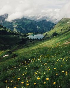 Green rolling hills and mountains with white clouds and yellow flowers