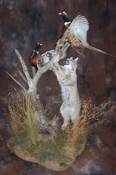 1000 Images About Bobcat Mounts On Pinterest Taxidermy