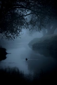 Shared by La peau de papier. Find images and videos about black, blue and nature on We Heart It - the app to get lost in what you love. Fantasy Forest, Dark Forest, Dark Fantasy, Foggy Forest, Dark Green Aesthetic, Nature Aesthetic, Woods Photography, Slytherin Aesthetic, Aesthetic Pictures