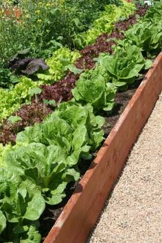 Google Image Result for http://www.sustainable-gardening-tips.com/images/cedar-raised-beds.jpg