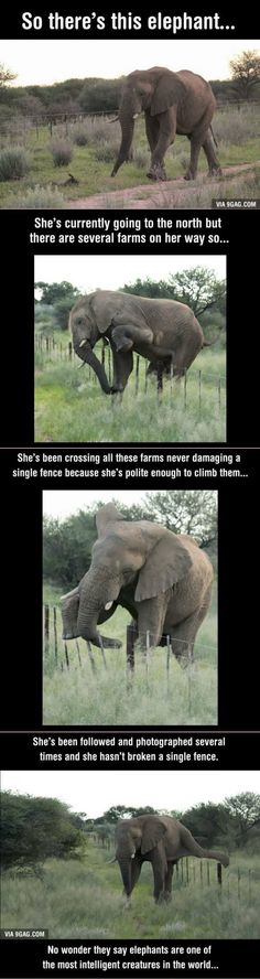 Elephants are awesome