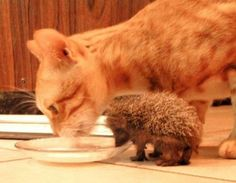 best friends having a drink together