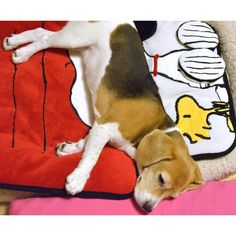 SNOOPY BED