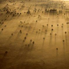 Pantanal, Brasil © Bobby Haas, @natgeo #luxosqueoimpériotece #luxo #brasil #matogrossodosul #pantanal #natureza #império #imperivm #imperivmriodejaneiro  Pantanal, Brazil © Bobby Haas, @natgeo #luxuriesthattheempireweaves #luxury #brazil #matogrossodosul #pantanal #nature #empire #imperivm #imperivmriodejaneiro