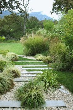examples of front garden design with gravel- Beispiele für Vorgartengestaltung mit Kies easy-care garden plants and pebbles - Perennial Grasses, Ornamental Grasses, Tall Grasses, Ornamental Grass Landscape, Hardy Perennials, Coastal Gardens, Gray Gardens, Modern Gardens, Path Design