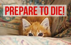 9 Thoughts Cats Have While Playing