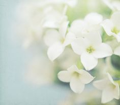 Event Inspiration - Dreamy Photography by Shana Rae - The Sweetest Occasion Little Flowers, Pretty Flowers, White Flowers, Flor Magnolia, Dreamy Photography, White Gardens, Flowers Nature, Growing Vegetables, Photoshop Actions