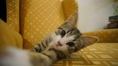 Ekvador'da sürgünde yaşayan Wikileaks'in kurucusu Julian Assange'a çocukları kedi yavrusu hediye etti. Minik kedi için sosyal medya sitesi Twitter'da, EmbassyCat (elçilik kedisi) kullanıcı adlı bir profil oluşturuldu. Detaylar ajanimo.com'da.. #ajanimo #ajanbrian #kedi #catstagram #cats #animal #animals #hayvan
