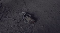 http://www.dan-marius.ro/masini-motoare_dezolarea_smaug_tabara_copii_moscova_ote4oa==.html#.VXmy8oqUfeQ  Desolation