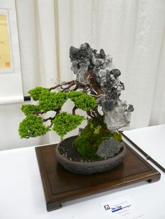 2010 Mar 24 SF Flower&Garden Show 32 Bonsai Juniper 40+yrs.JPG