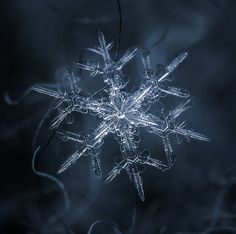 Amazing Close Up Photos Of Snowflakes Will Give You Goosebumps.