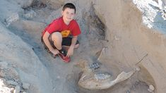 A boy hiking with his family in New Mexico trips over what turns out to be a million-year-old fossil of a stegomastodon.