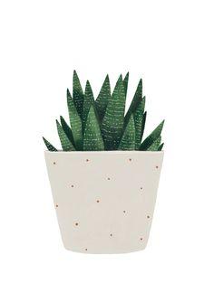 Cactus prints for www.hermanogato.com
