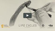 LIFE CYCLES Ross Hogg