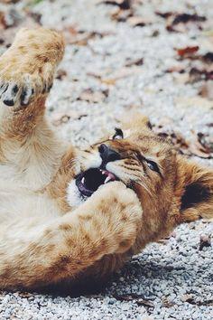 wolverxne:  See My Teeth ???   by: { Josef Gelernter }