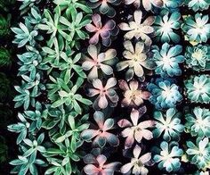 #flowers #blue #green #nature