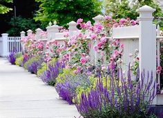 beautiful fence and flowers  -  perfect Spring
