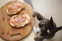 15 Human Foods That Are Safe for Cats - great info, just in case you have a little scavenger!