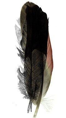 I want my raven feather tattoo already