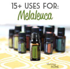 15-Uses-for-Melaleuca