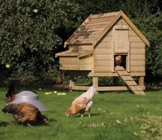 This great looking chicken coop can comfortably house up to six medium to large chickens. Complete with 2 internal perches and a three compartment nest box with removable lid for easy egg collection. A slide opening door with hook support and ramp rear Chicken Coop Pallets, Best Chicken Coop, Building A Chicken Coop, Chicken Coops, Chicken Houses, Chicken Pen, Chicken Coop Plans Free, Chicken Coop Blueprints, Chicken Enclosure