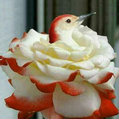 #Flora&Fauna-Flowers&Plants