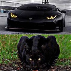 Car Images: If you're Car Lover Than Your at the right place here are you find best car images and you definitely love it and also check our all collection of car images. Ferrari, Lamborghini Huracan, Panther Car, Black Panther, Bugatti, Maserati, Koenigsegg, Motivation Sportive, Photographie New York