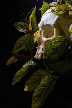 Skull Anatomy, Skeleton Anatomy, Skeleton Art, Skull Reference, Drawing Reference Poses, Human Art, Human Skull, Mtg Altered Art, Skull Artwork