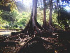Kauai, Hawaii #travel #hawaii #kauai #worldtravel