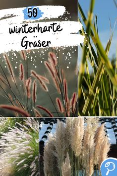 Ornamental grasses look incredibly peaceful and beautify any garden or balcony. Many grasses are hardy plants. We present 50 hardy ornamental grasses for the garden or the balcony tub. The whole list is on Plantopedia.