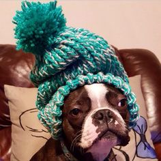 Rocking this awesome beanie is Dexter! Show some love to @Dexterthebt  ___ #dog #dogsofinstagram #instadog #puppy#instapup #instapuppy #doglover #puppyeyes#BostonTerrier #bostonterriersofinstagram #like #follow #FetchedtheWorld #instapet #pet #animal #bostie #bostonterriers # dogstagram #bostonterriercult #bostonterrierlove by fetchtheworld