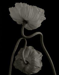 Yumiko Izu, Secret Garden, Noir