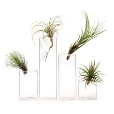 Glass Cube Vase Set of 18