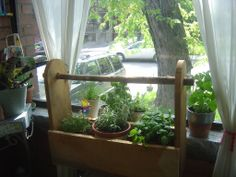 A great sunny spot at the front of the apartment serves as a great herb garden location {How to preserve your herbs with these 3 simple techniques. Herb Garden Pallet, Diy Herb Garden, Garden Ideas, Herbs Garden, Herbs For Depression, Growing Herbs Indoors, Garden Posts, Aromatic Herbs, Indoor Plants
