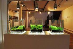 Beautiful Art Of Designing Aquascapes Aquarium