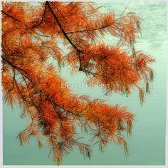 """dreamlike red tree"" von Bernd Hoyen  #fotografie #photography #fotokunst #photoart #digitalart #kunst #art #baum #bäume #tree #trees #rot #red #natur #nature #deutschland #germany #berlin"