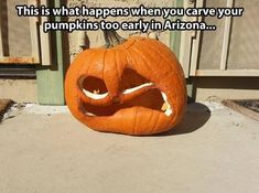Funny Pumpkins, Halloween Pumpkins, Halloween Humor, Halloween 4, Pumpkin Carving Tips, Cops Humor, Seriously Funny, What Happens When You, I Love To Laugh