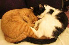In meinem nächsten Leben werde ich Katze: so kuschelig schlafen nur die Stubentiger - und diese zwei leben bei Frau Schulz.