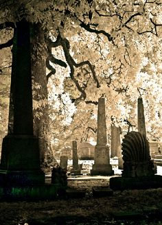 quiet mood in old cemetery