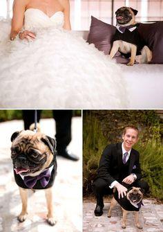 Oh wedding pug, could you get any cuter? Photo by Renee Brock Photography via JunebugWeddings.com