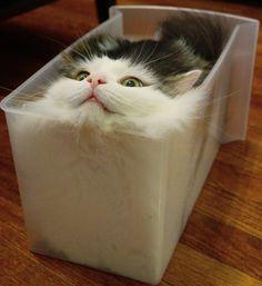 "Audrey & Cats on Instagram: ""Another one #catsareliquid #catsoninstagram #catsoftheworld #instagood #best #aww#love"""