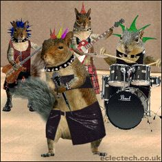 Another squirrel band