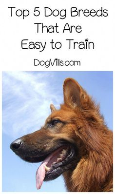 329 best how to house train a dog images in 2019 rh pinterest com