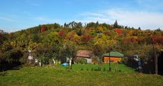 The local community garden is now very colourful as well  #indiansummer #communitygarden #colorfultrees #autumncolours #fallcolors #brno #czech #morava #naturewalk #czechrepublic #czechphotography #czech_world #igerscz #hikingadventures #hikingtrails #citywalk #hikingculture #hikinglife #naturelovers #naturepics #natureview #outdoors #outdoorlife #outdoorslife #sceneryshots #autumnday #autumnlove #autumntrees #natureinthecity #photooftheday